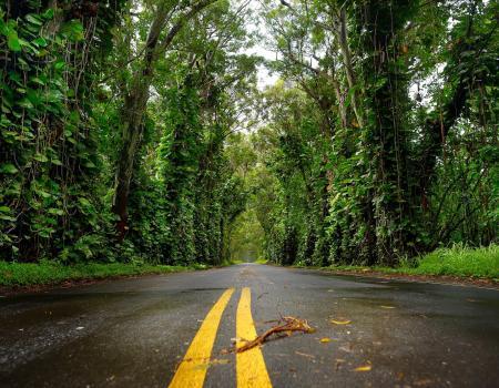 Kauai Tree Tunnel