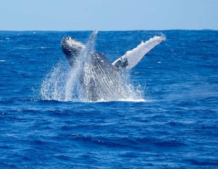 whale watching boat tour on kauai
