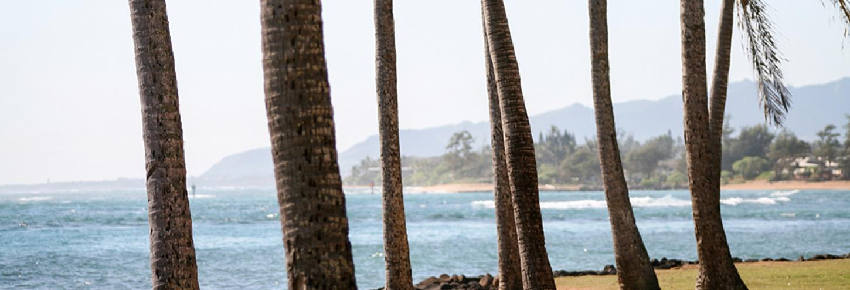 Kapaa Town Coconut Trees