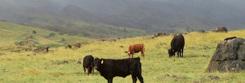 Ulupalakua Ranch Maui