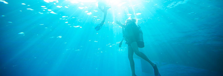 Kauai Scuba Divers