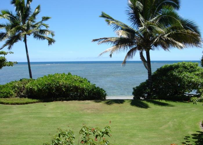 Beachfront grassy yard