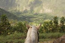 Hawai'i Island on horseback