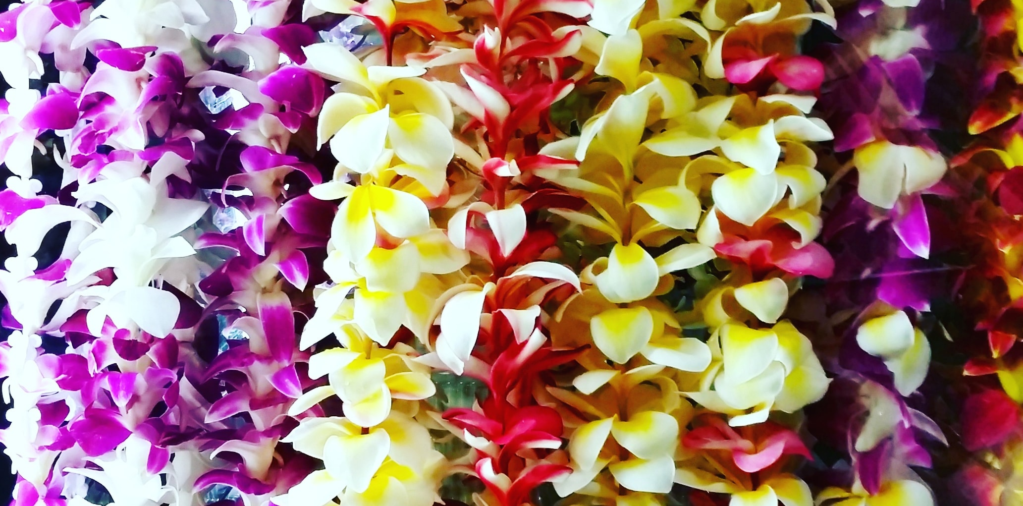 hawaiian leis colorful