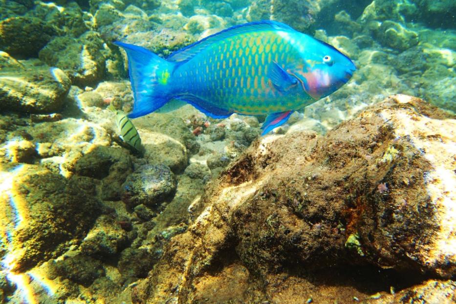 Hoʻokena coral reefs