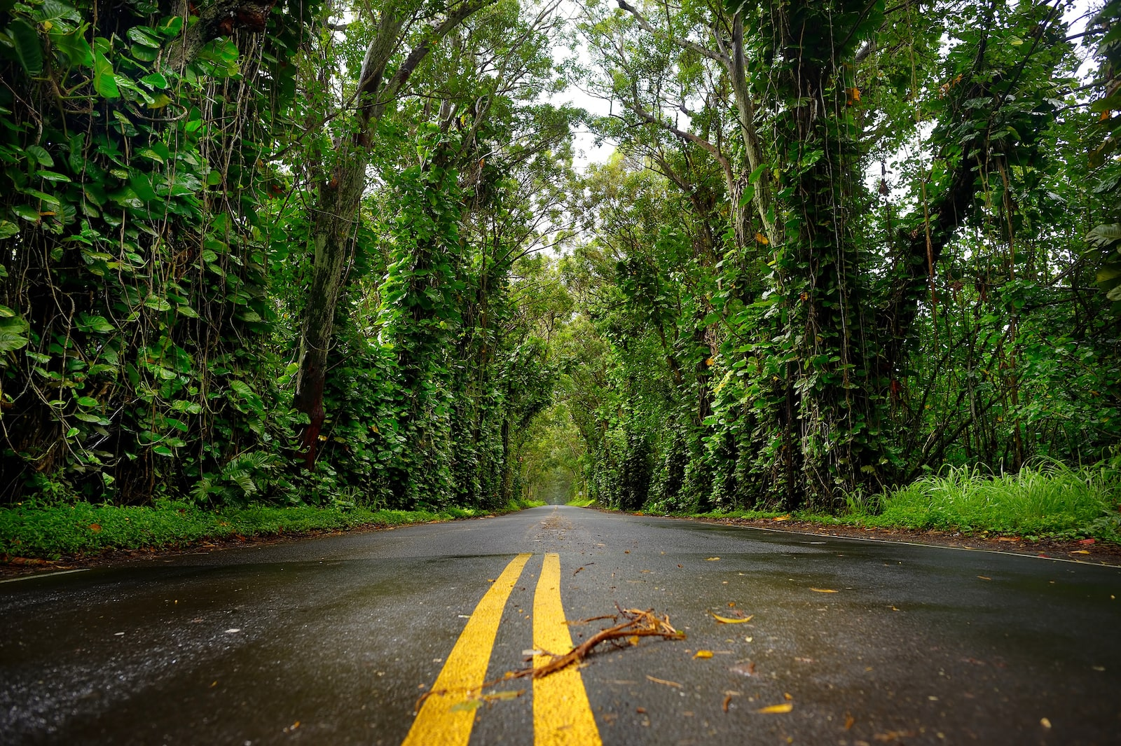 Kauai Tree Tunnel