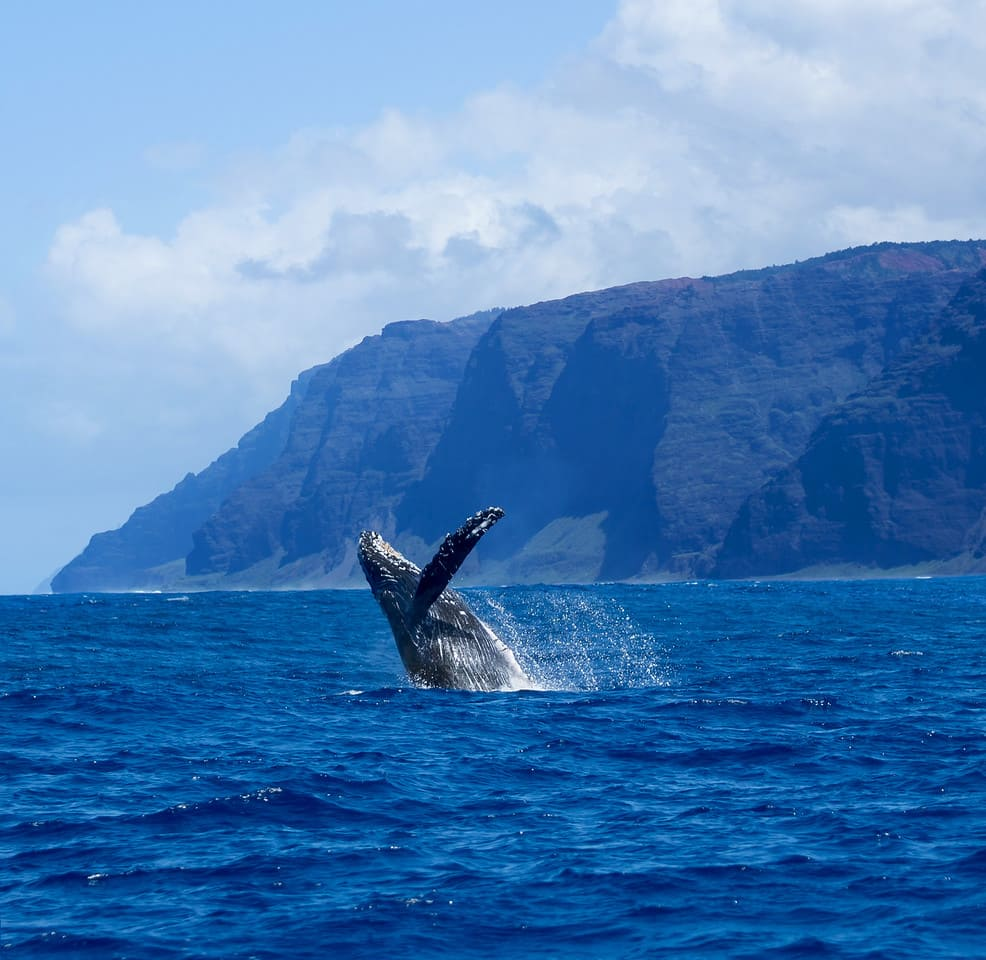 whale watching on kauai